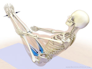 Adductor muscles in navasana, boat pose