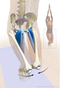 Adductor muscles in chair pose