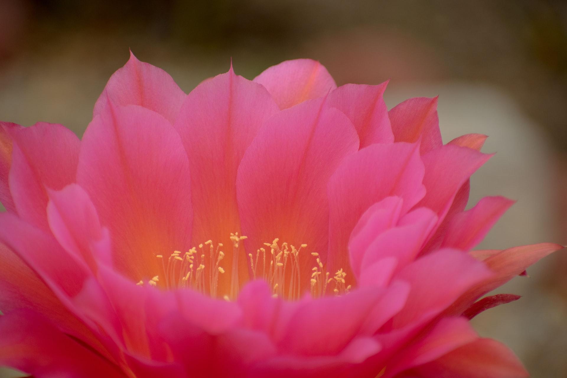 Iyengar Yoga and a Beginners Mind